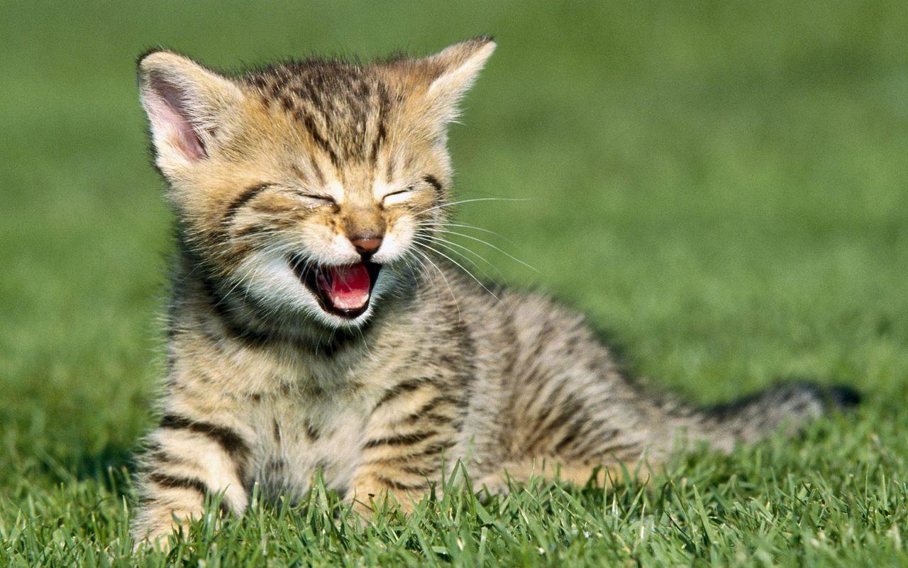 Cat Insurance Cost