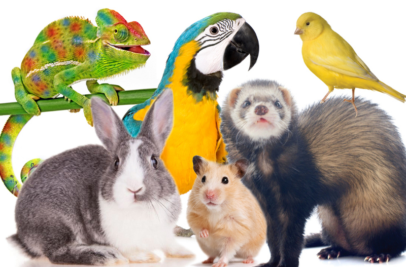 Bird and Exotic Pet Insurance