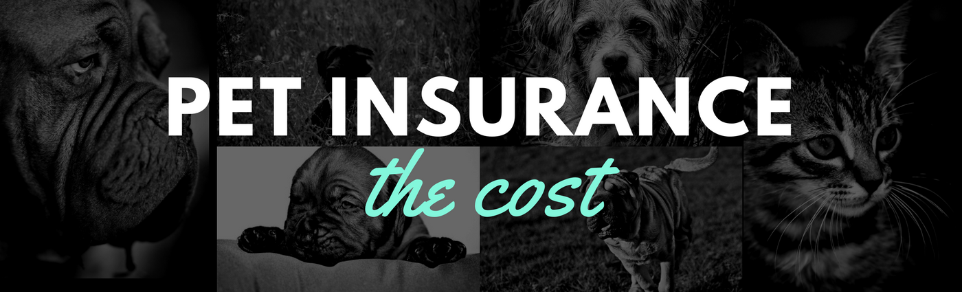 Pet Insurance: The Cost