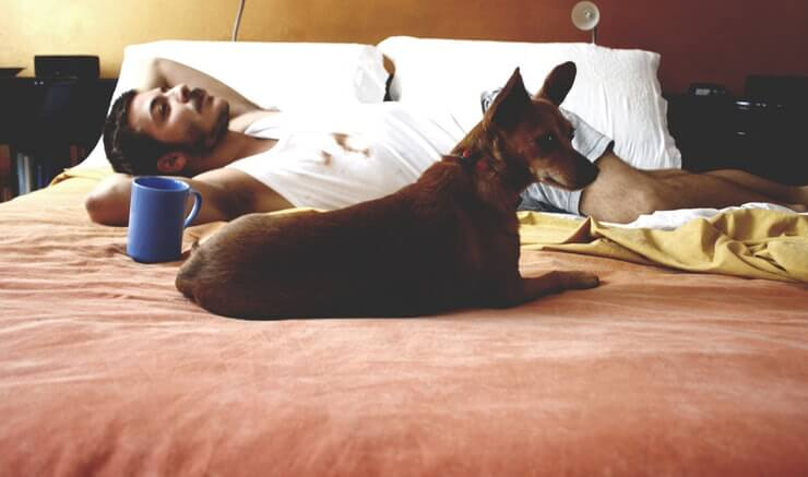 Are You Choosing Your Dog Over Love?