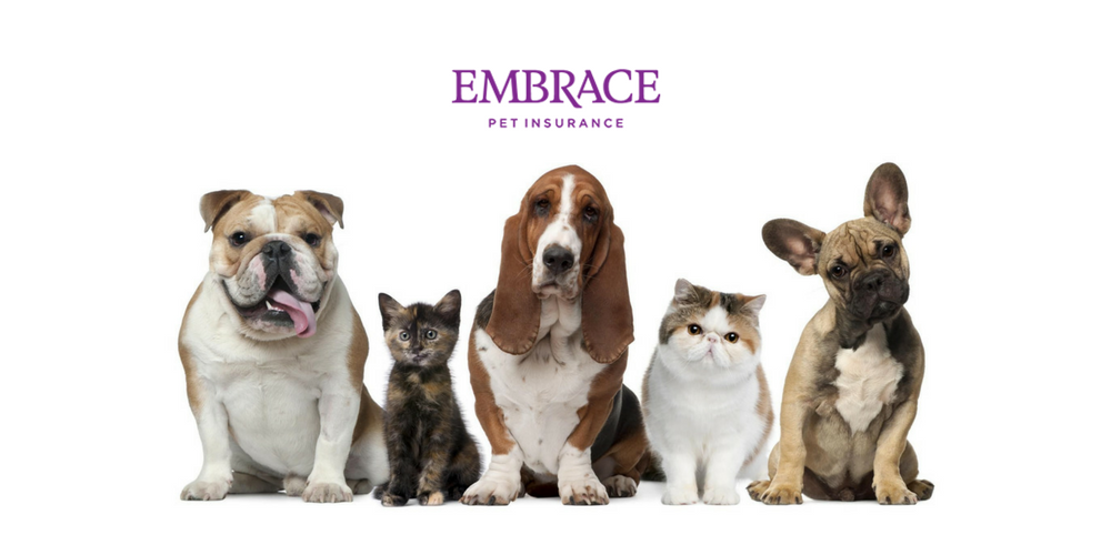 Embrace Pet Insurance Review - 365 Pet Insurance