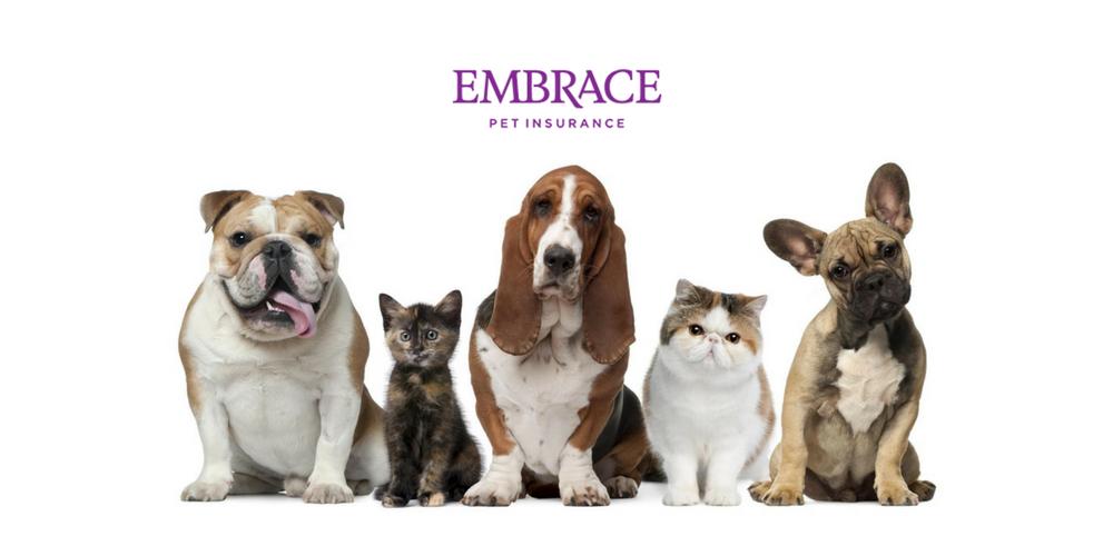 Embrace Pet Insurance Review 365 Pet Insurance