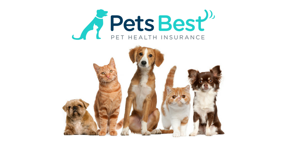 Pets Best Pet Insurance Review