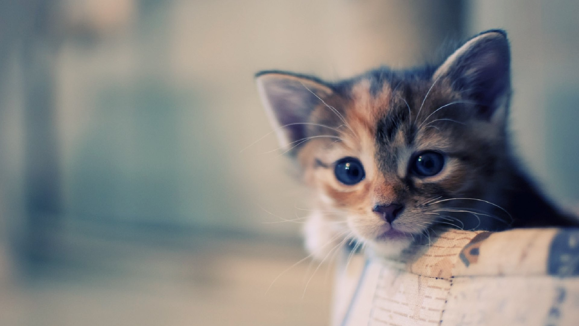 4 Top Tips for Getting a New Kitten
