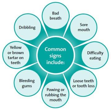 Pet Dental Disease