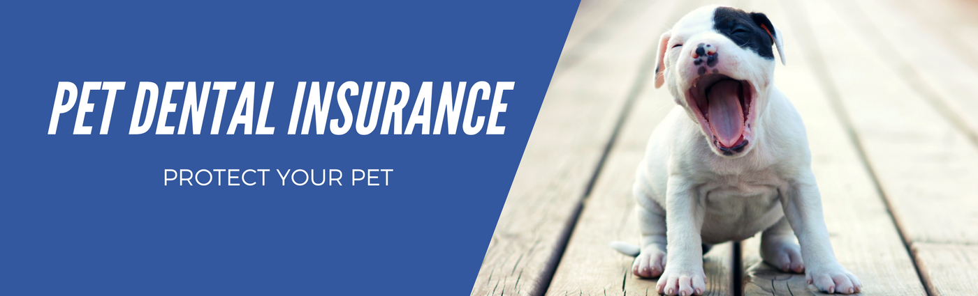 Pet Dental Insurance - 365 Pet Insurance
