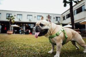 Pre-Existing Conditions Pet Insurance - 365 Pet Insurance