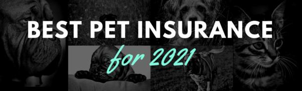 2021 Pet Insurance Reviews