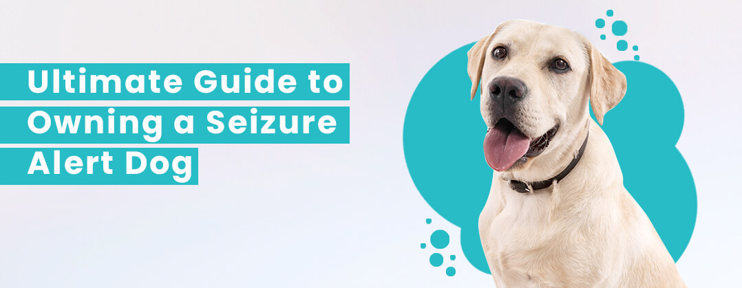 Ultimate Guide to Owning a Seizure Alert Dog