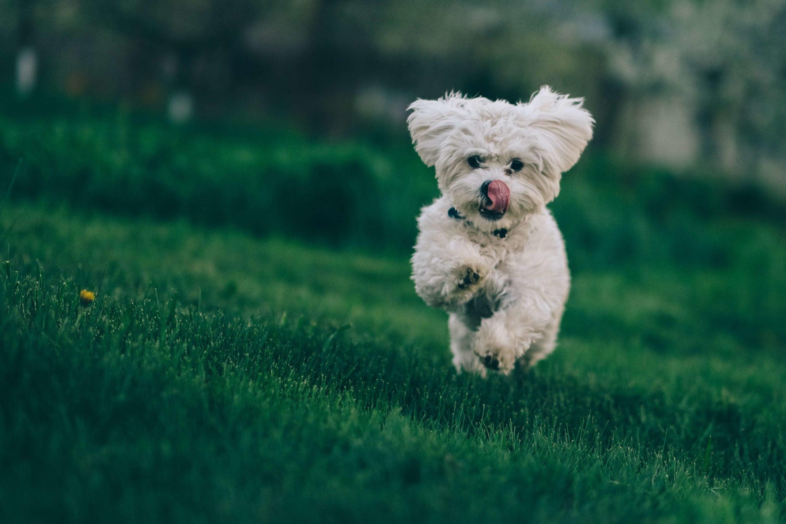 Dog Cruciate Ligament Injury Surgery