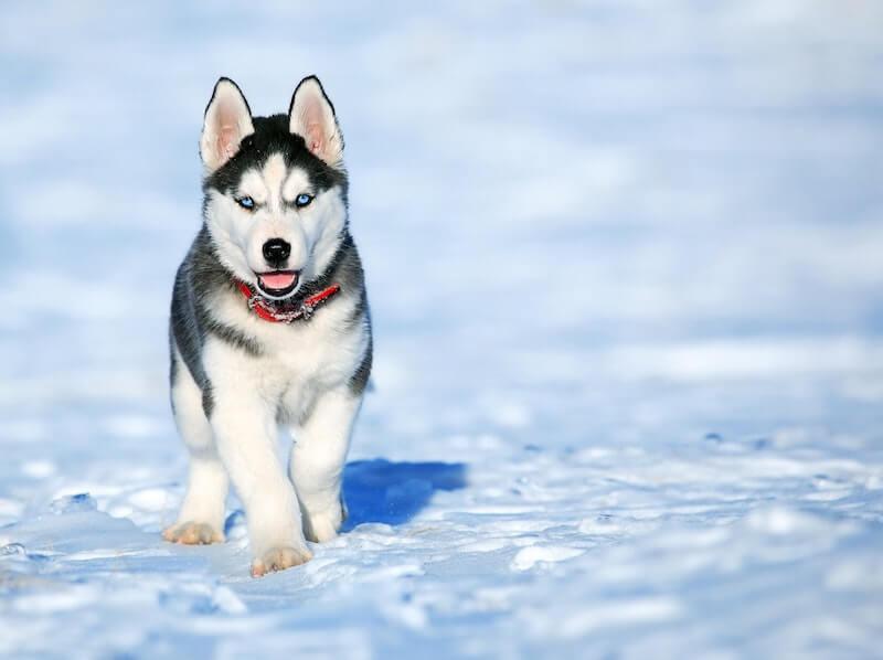 Pet Insurance in Alaska