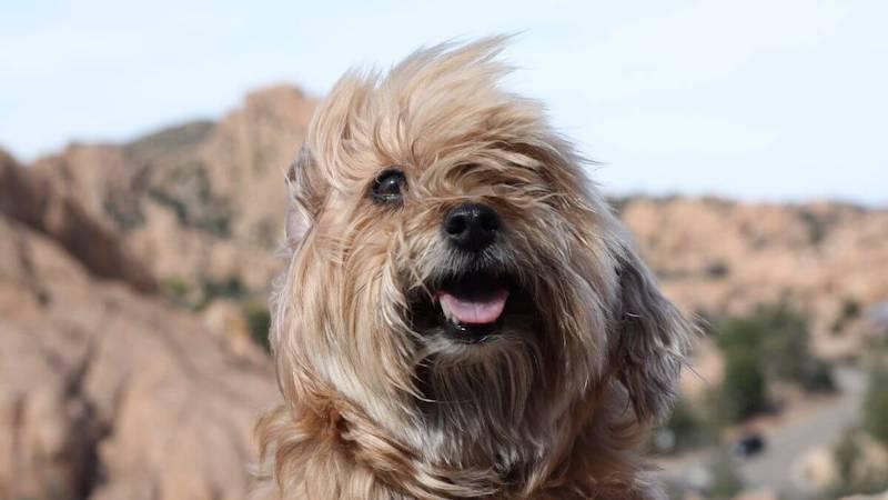 Pet Insurance in Arizona