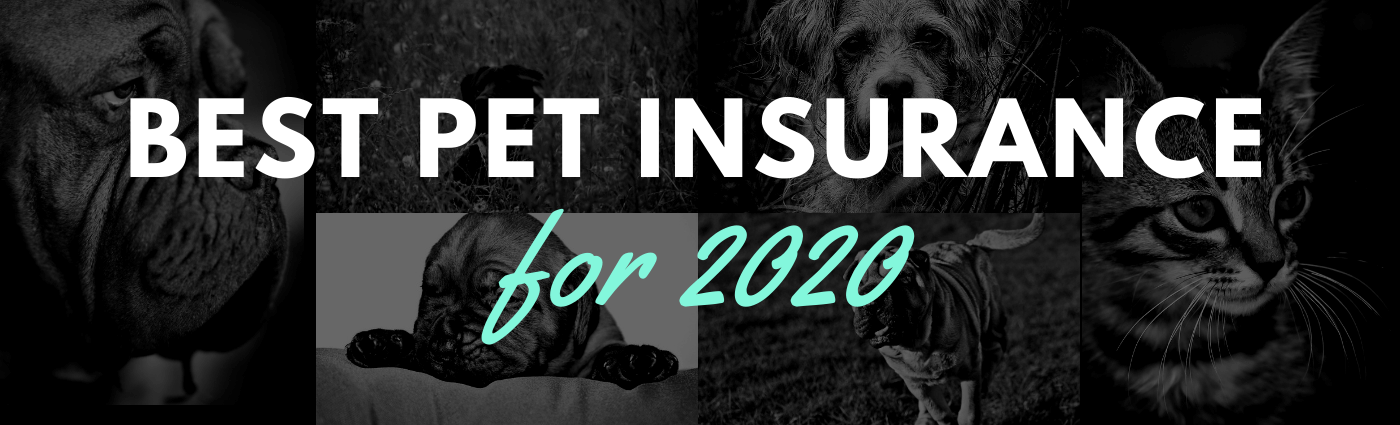 Best Pet Insurance Reviews for 2020