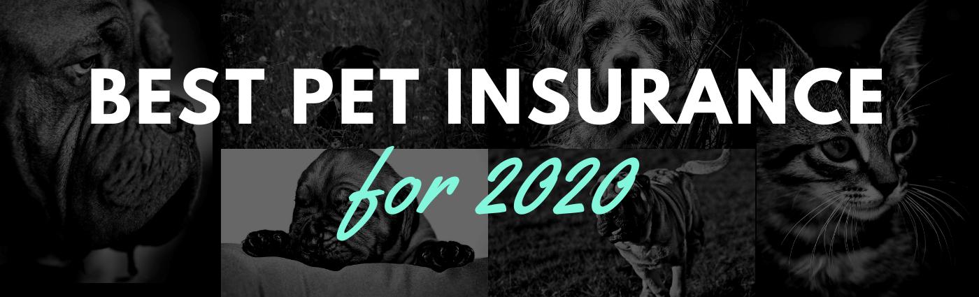 Best Pet Insurance Reviews for 2020