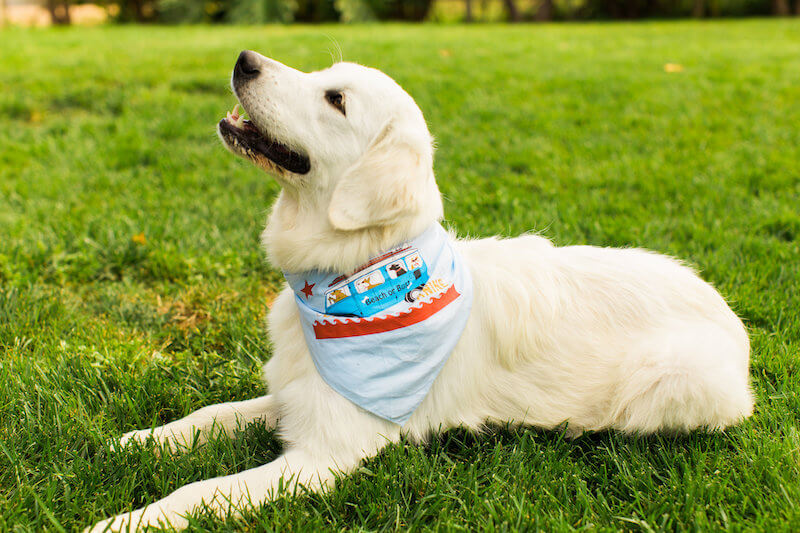 California Pet Insurance