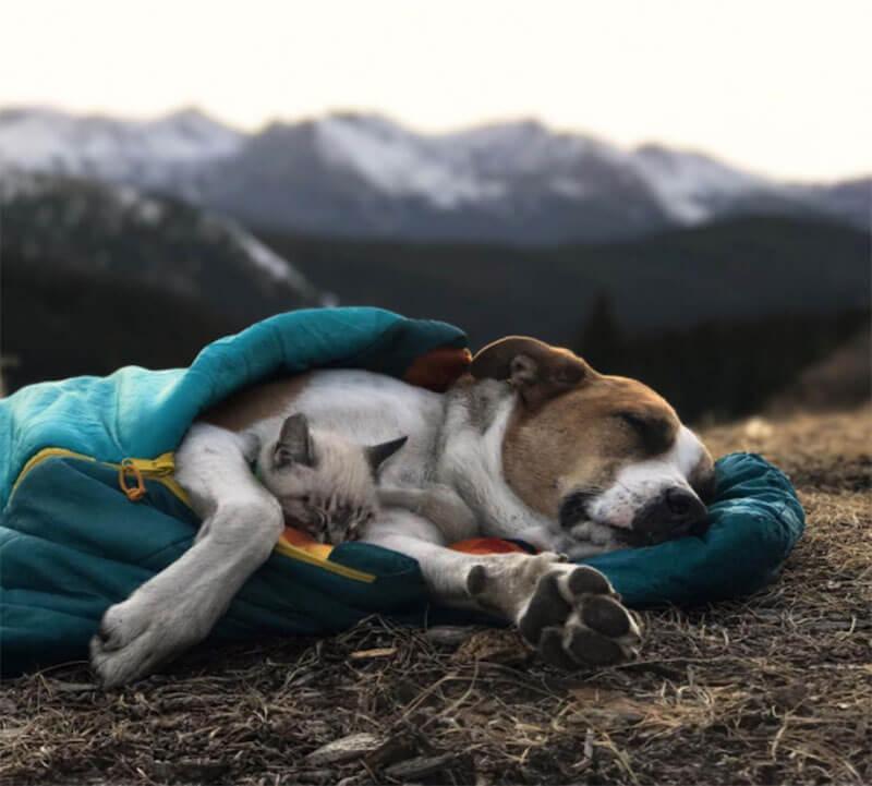 Pet Insurance in Colorado