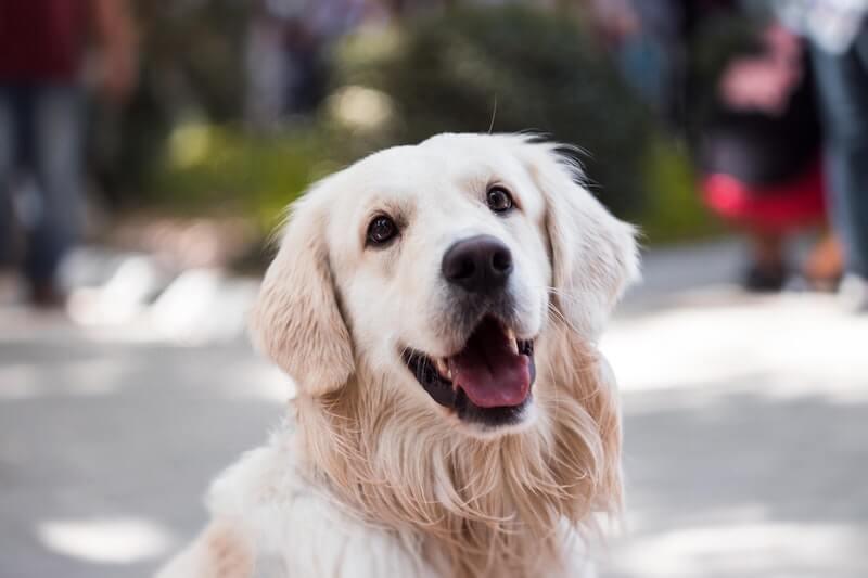 Pet Insurance in Delaware