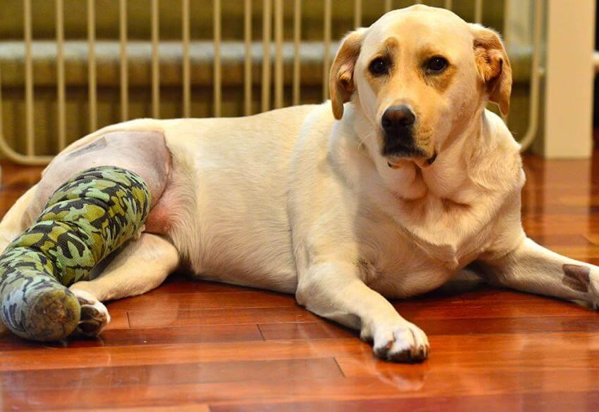 Does Pet Insurance Cover Cruciate Surgeries? - 365 Pet ...