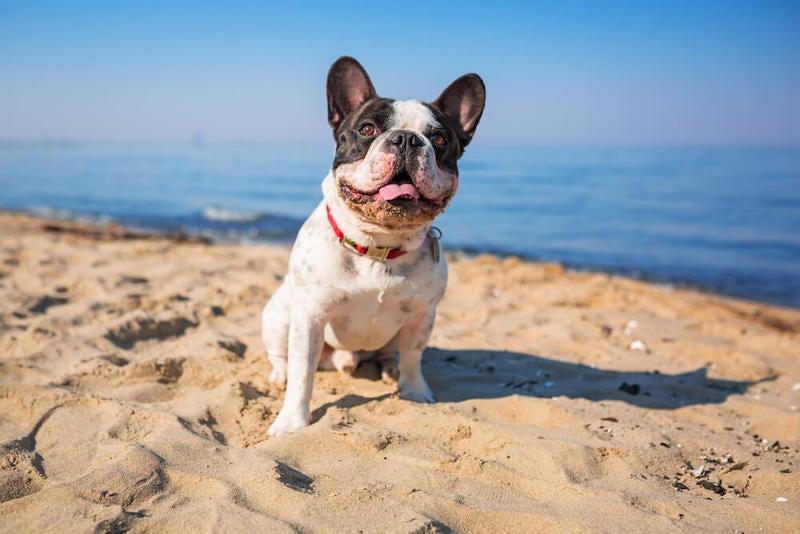 Florida Pet Insurance