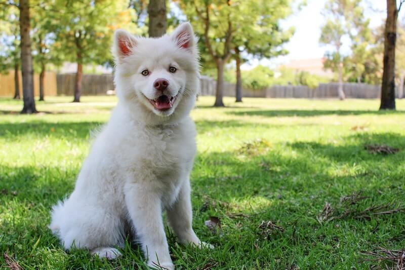 Georgia Pet Insurance