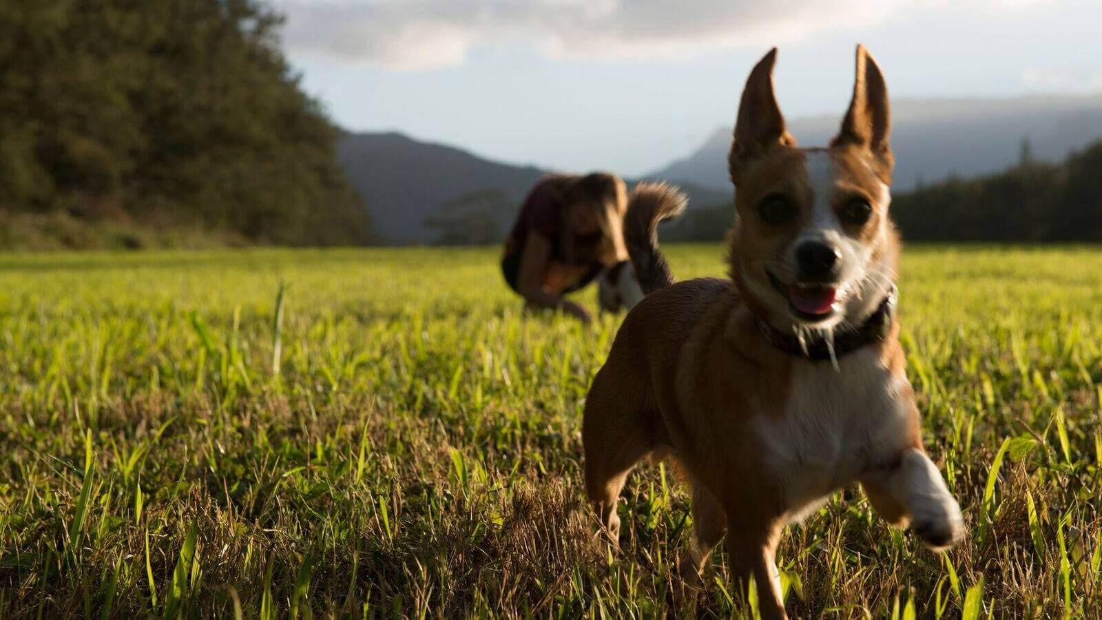 Pet Insurance in Hawaii 2019 New Research - 365 Pet ...