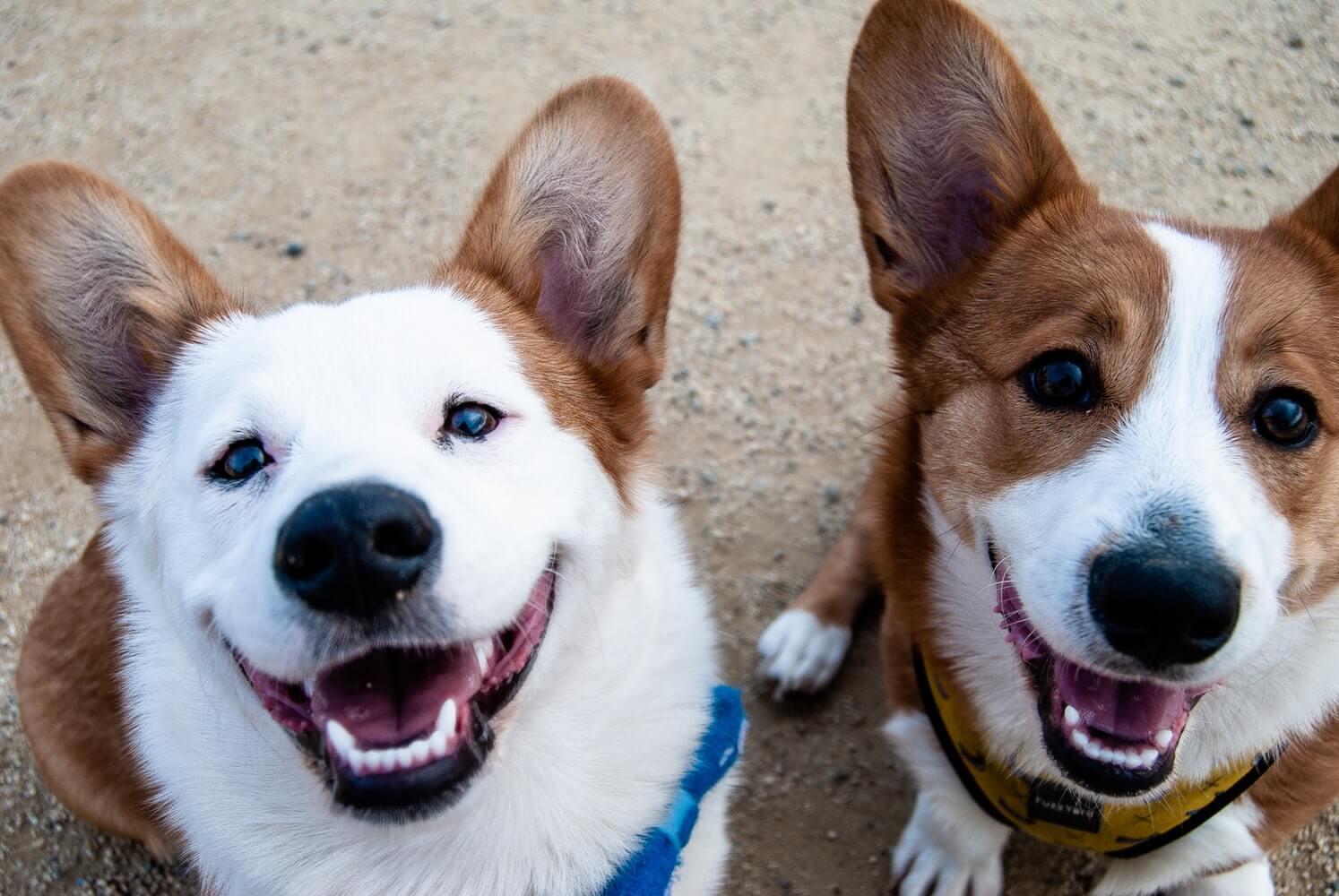 Nevada Pet Insurance New Data For 2020 365 Pet Insurance