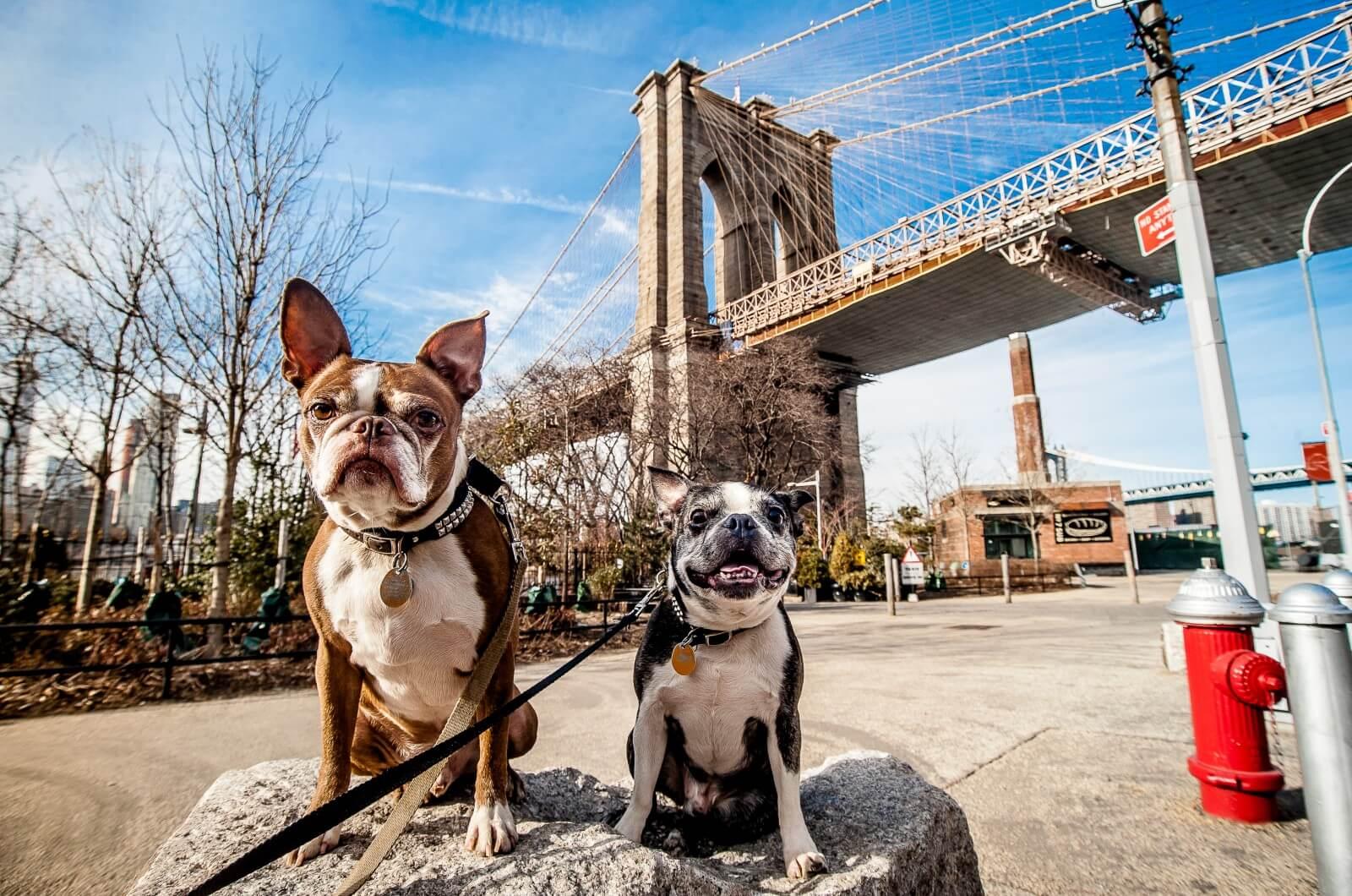 New York Pet Insurance