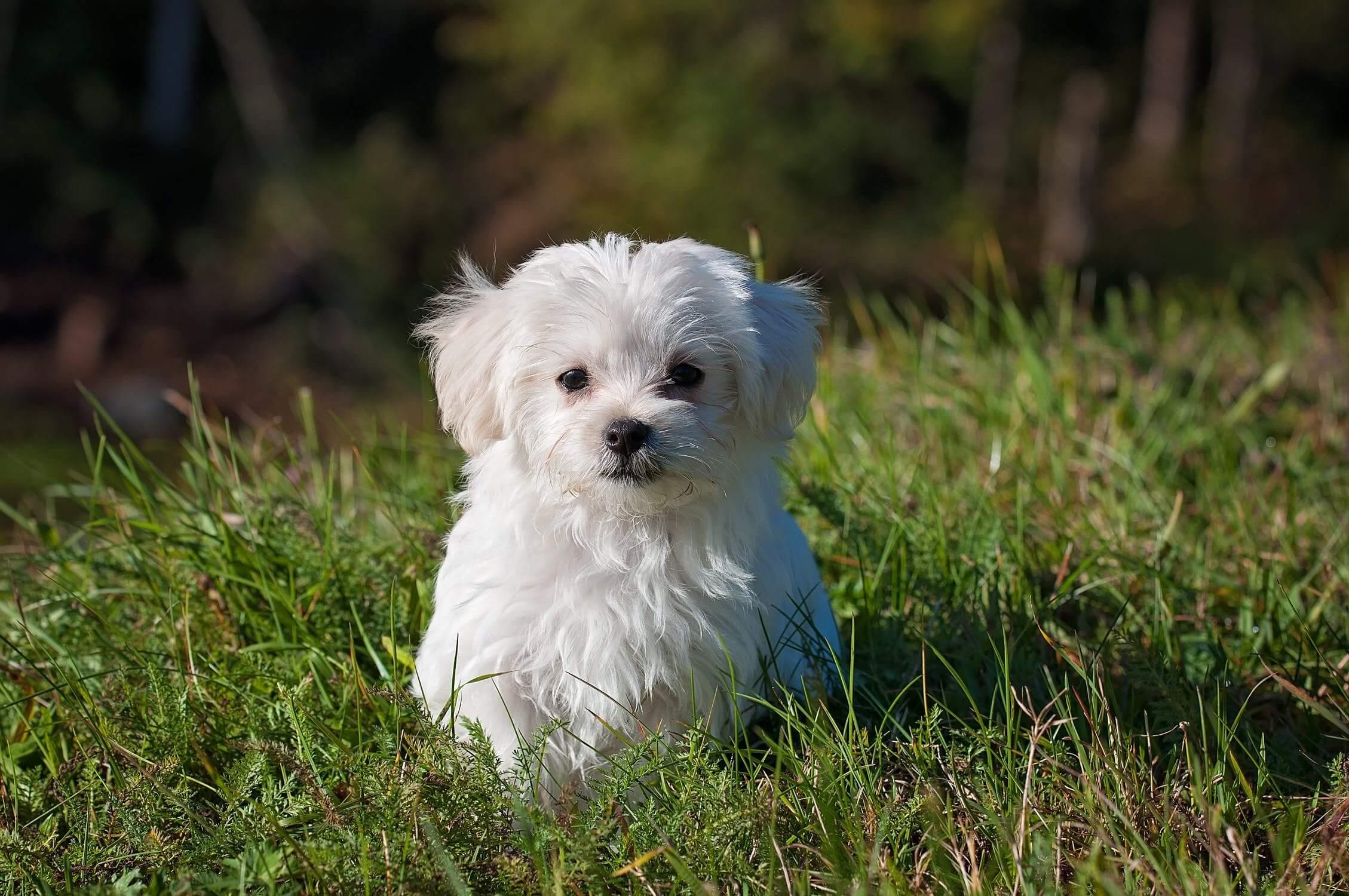 North Carolina Pet Insurance