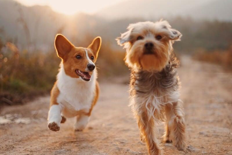 Oklahoma Pet Insurance - Reviews, Rates, Policies - 365 Pet Insurance