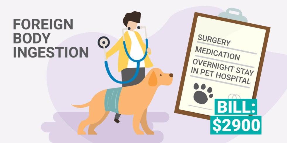How Does Pet Insurance Work? - 365 Pet Insurance
