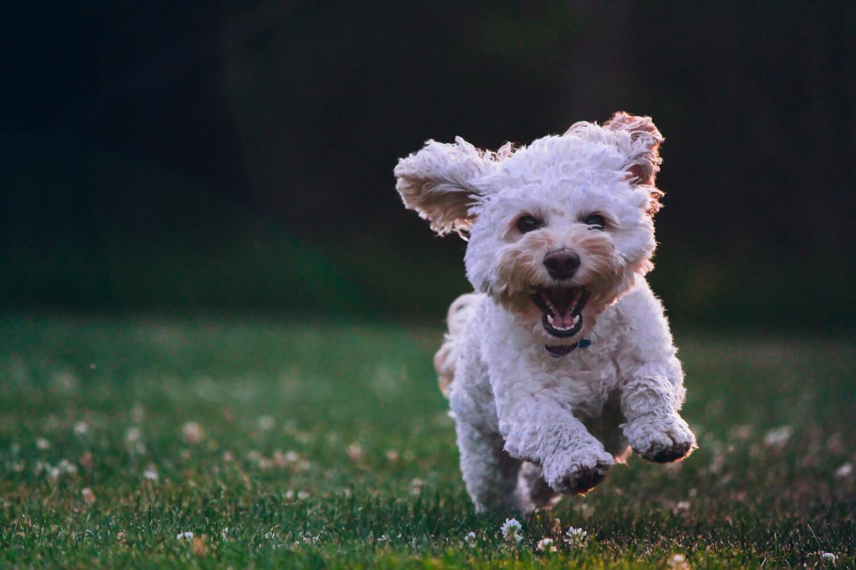 Pet Insurance in Connecticut