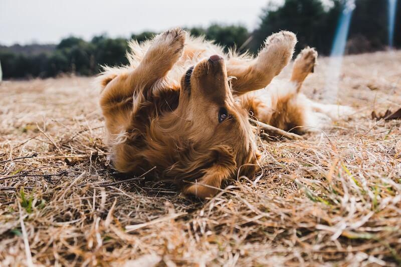 Pet Insurance In Wisconsin New Data For 2019 365 Pet Insurance