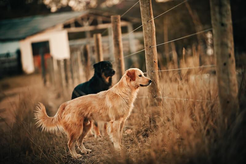 Wyoming Pet Insurance