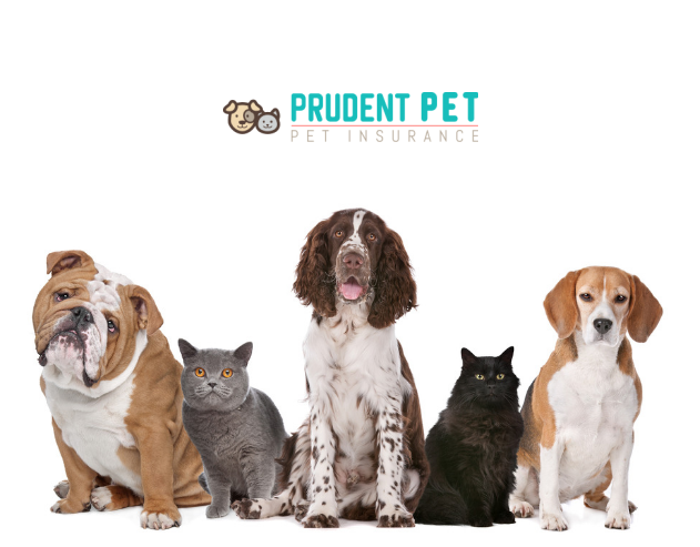 Prudent Pet Insurance Review