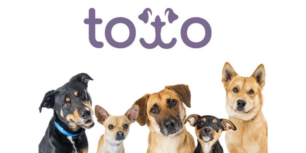 Toto Dog Insurance