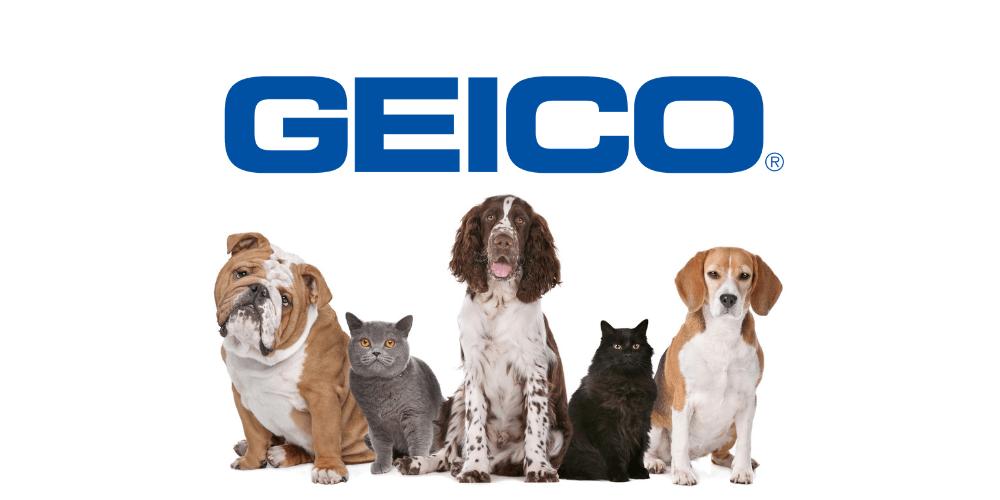 Geico Pet Insurance Review 365 Pet Insurance