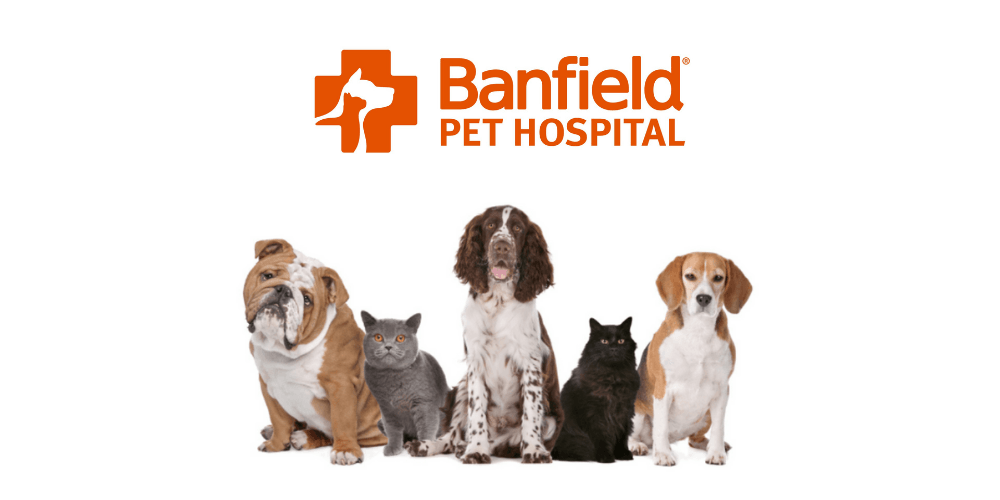 banfield review