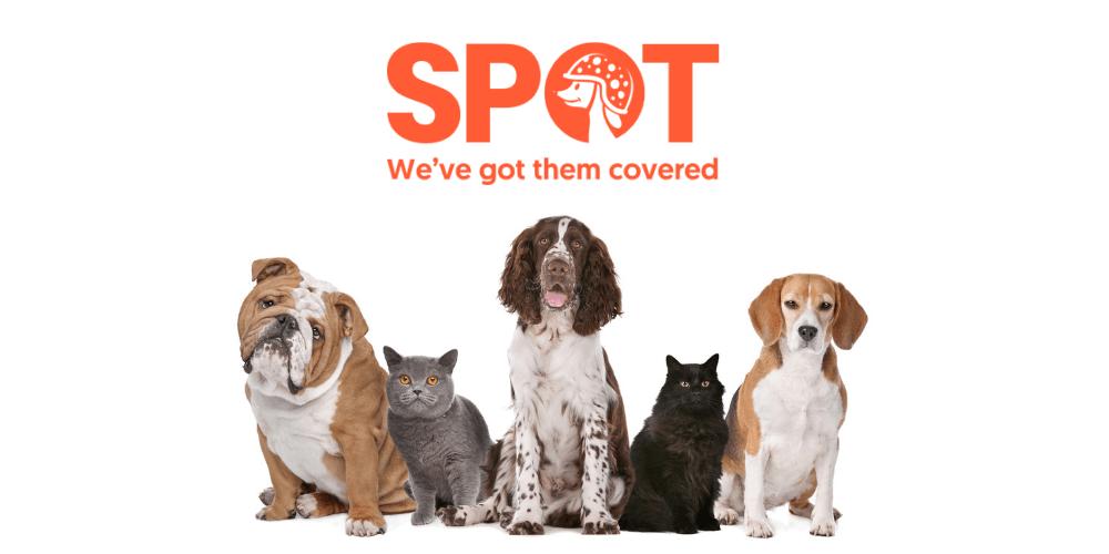 Spot Pet Insurance