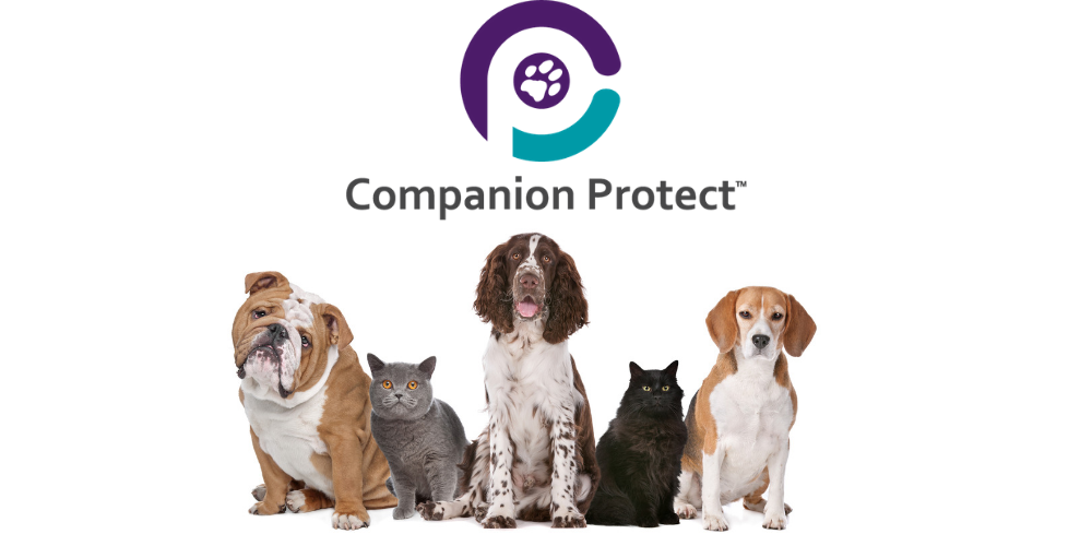 Companion Protect Insurance Review