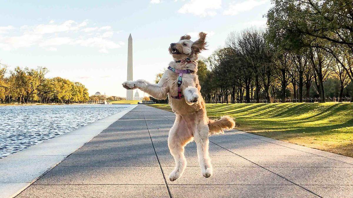 Pet Insurance in the District of Columbia