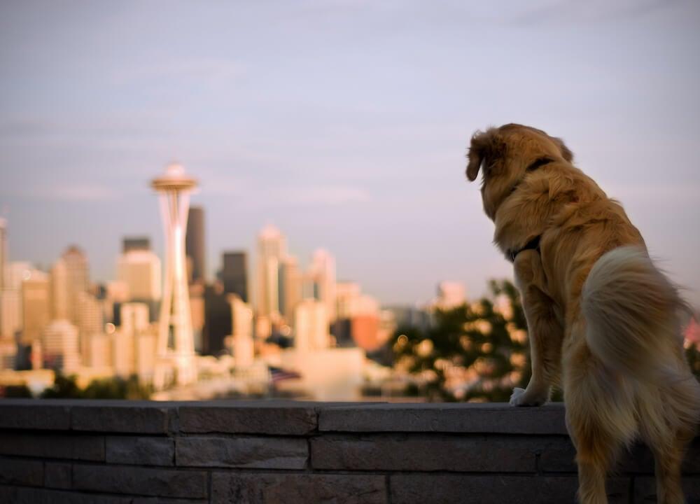 Washington Pet Insurance