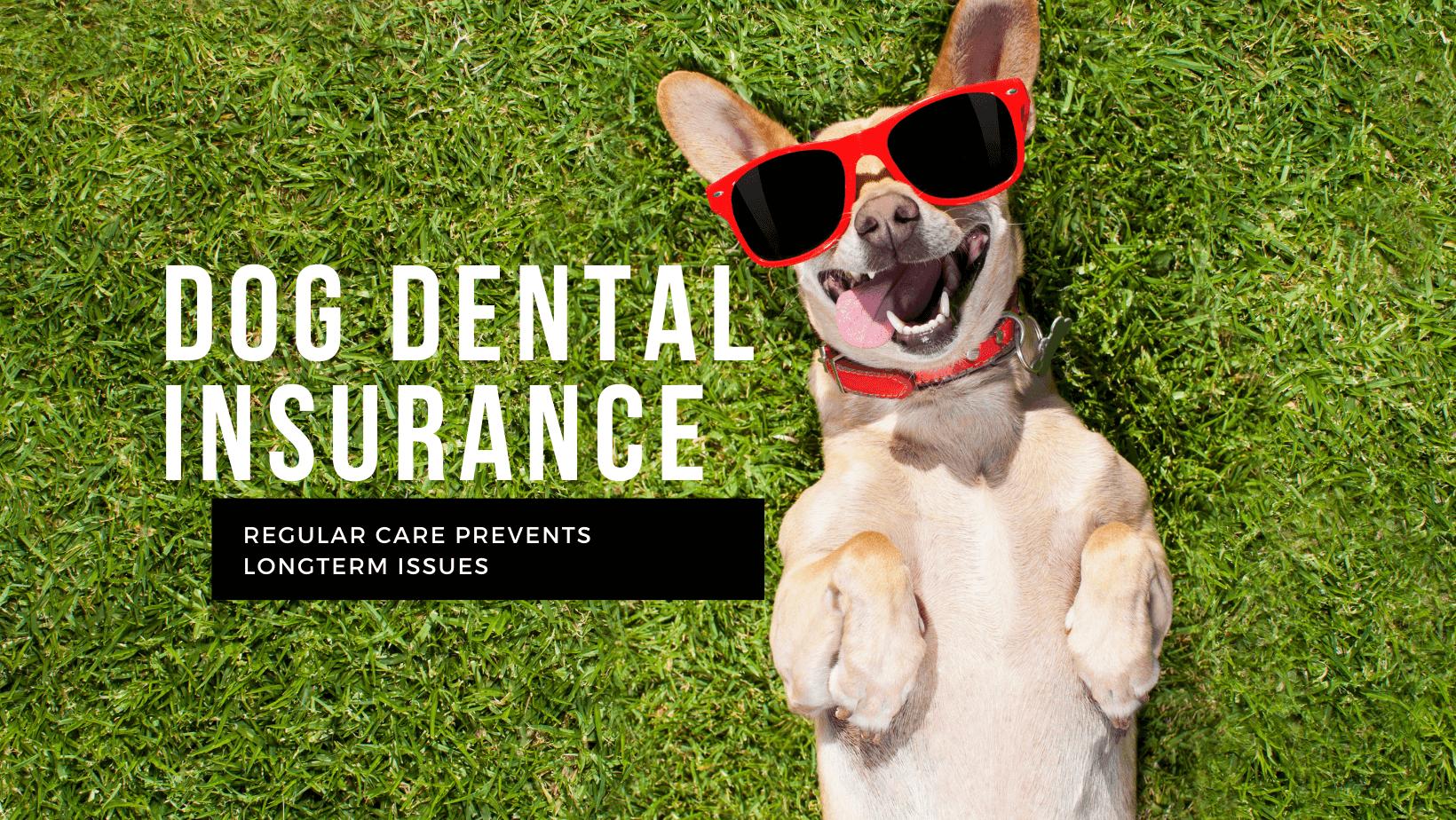 Dog Dental Insurance
