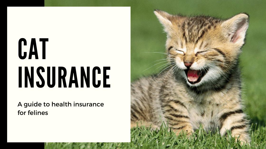 Cat Insurance