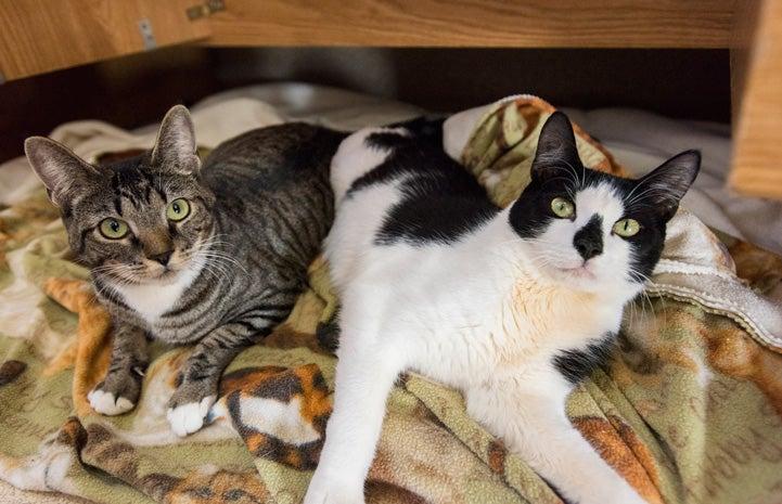 Cerebellar Hypoplasia in Cats and Dogs