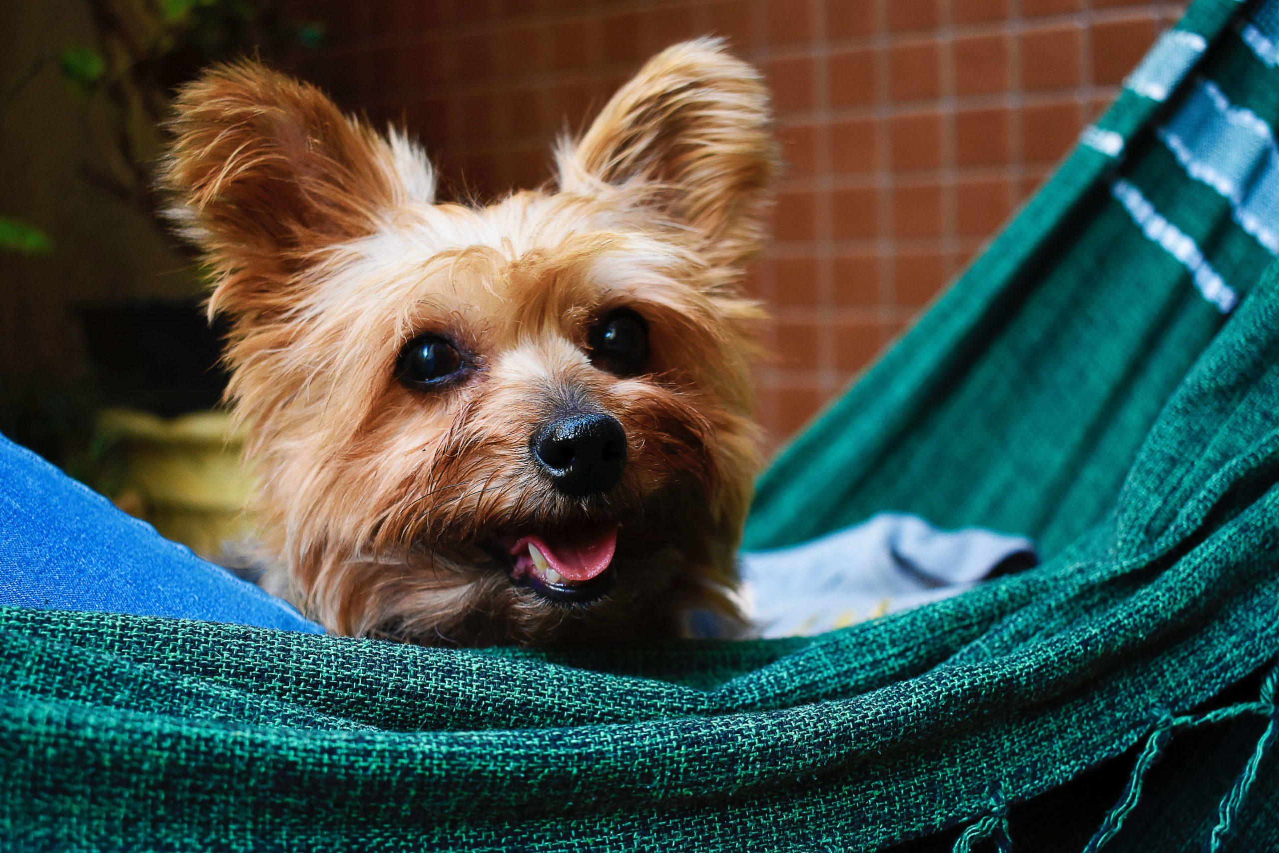 Pet Insurance with No Reimbursement