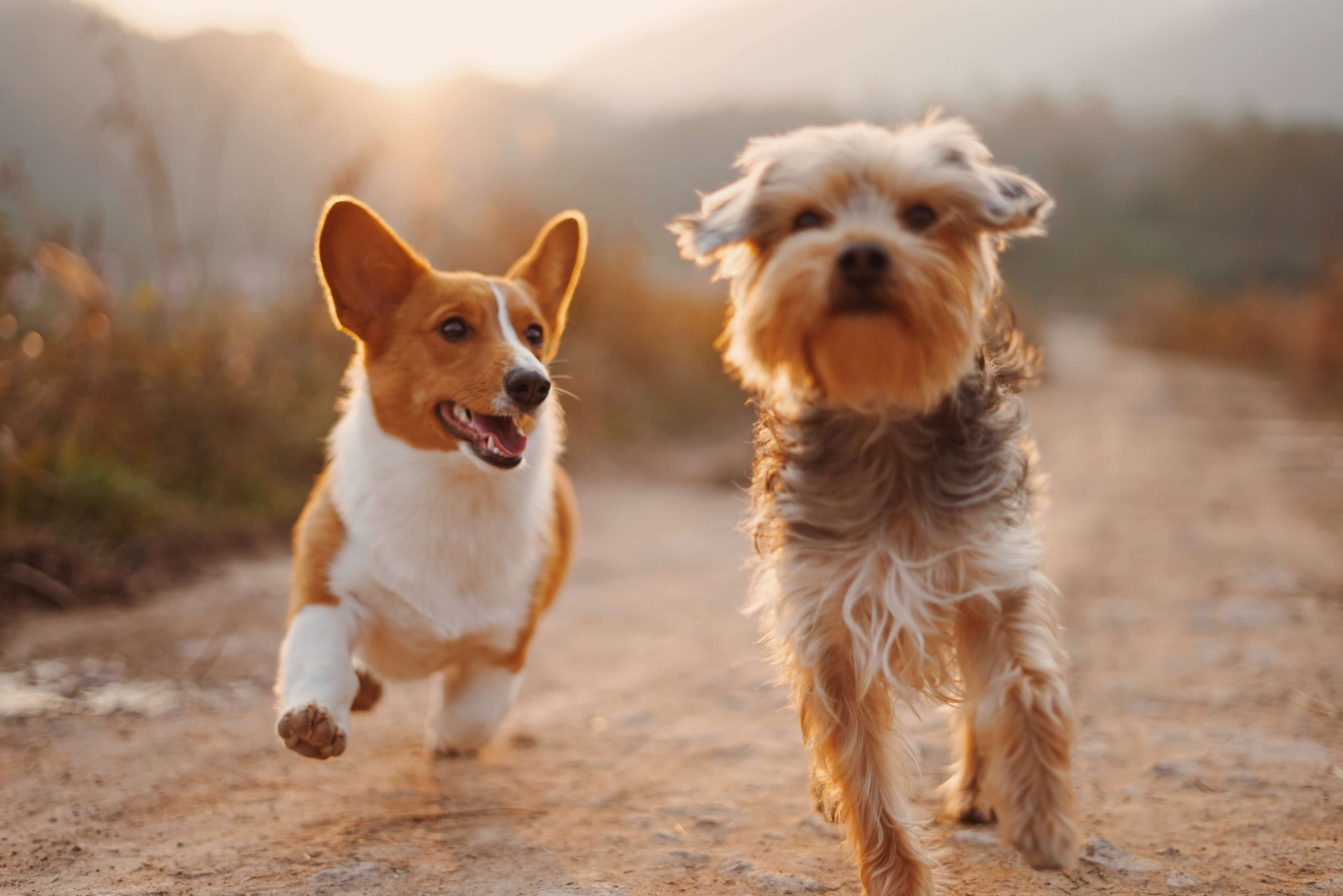 Pet Insurance with No Waiting Period
