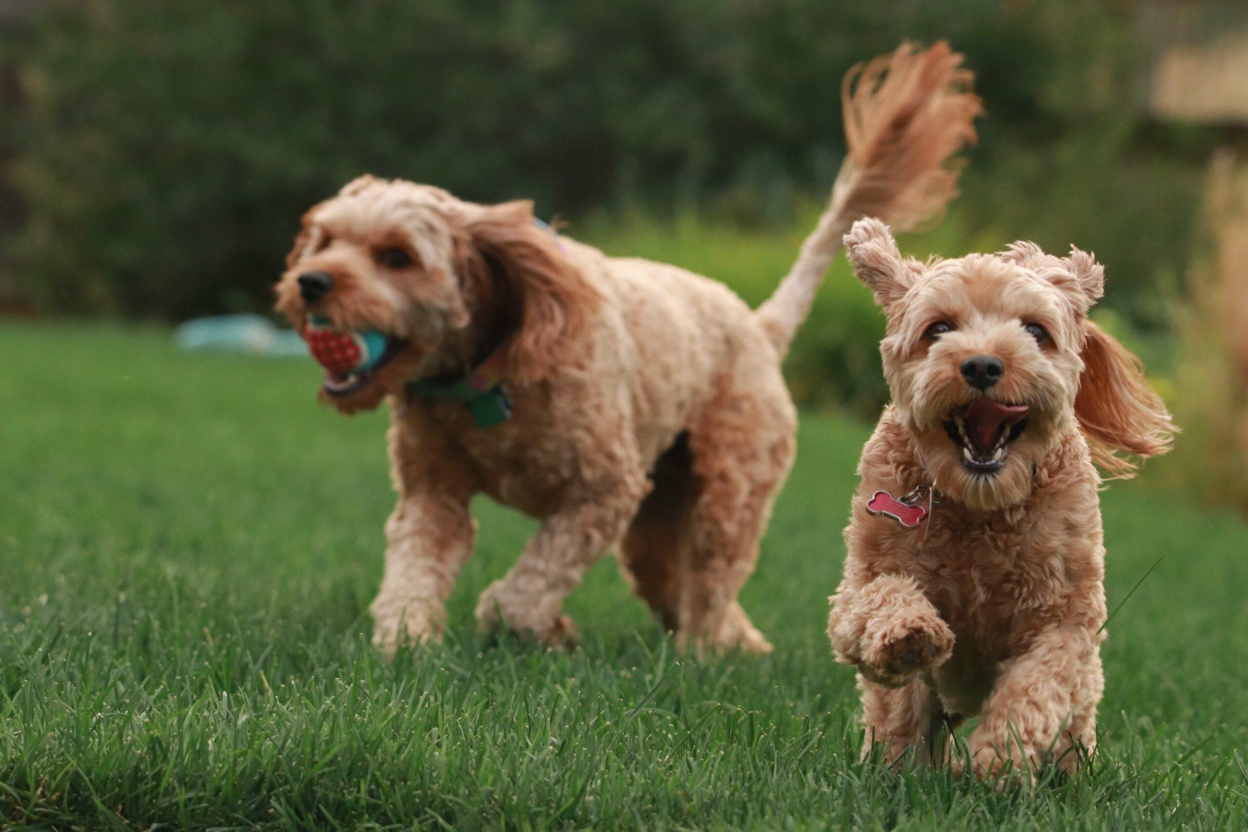 pet insurance for multiple pets