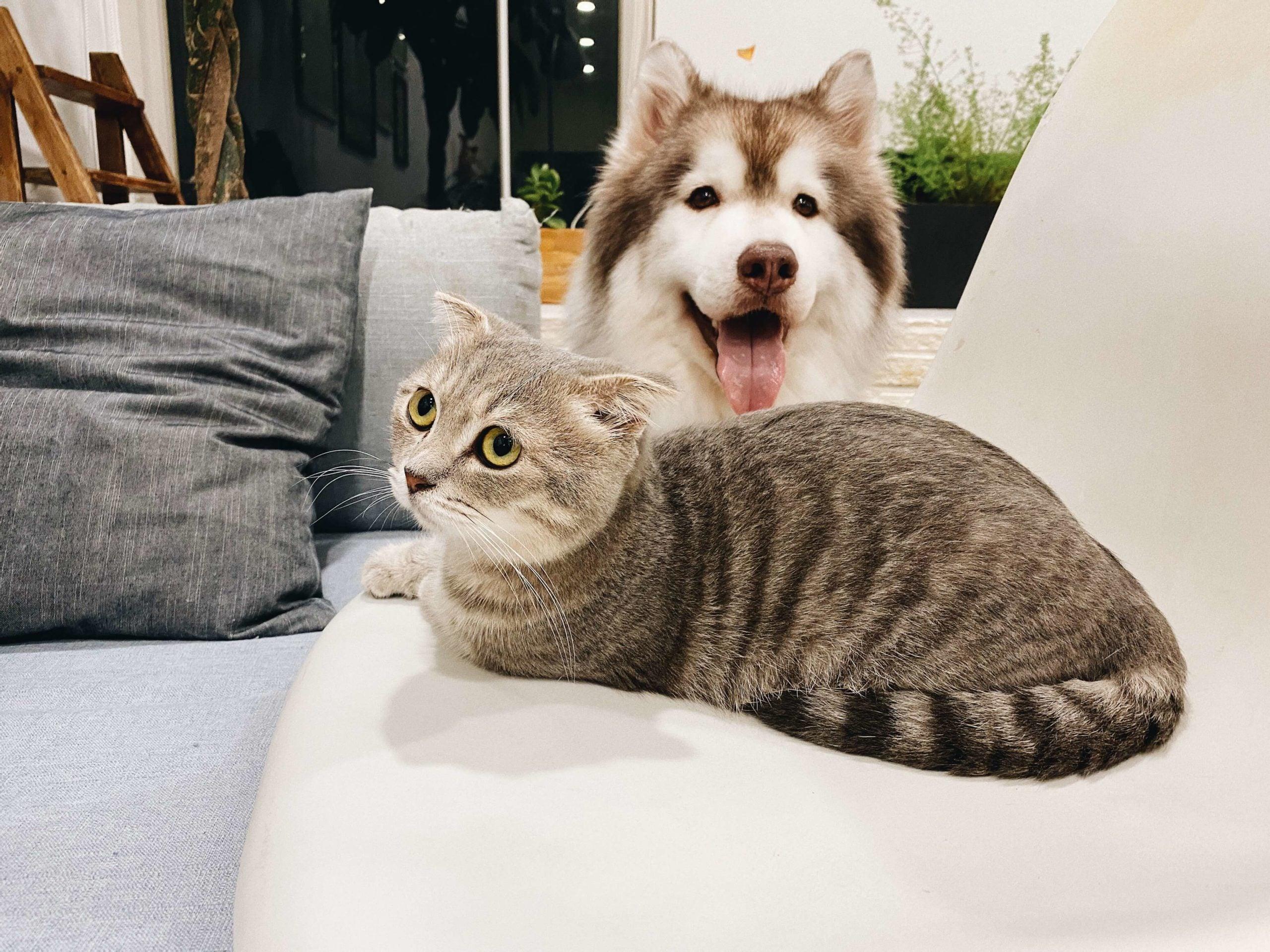 Does Pet Insurance Cover Prescriptions?
